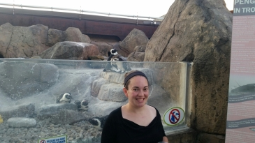 Penguins at the National Aviary